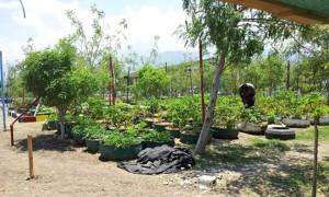 haiti_slum_660