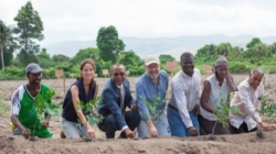 Timberland Will Get Cotton from a Nifty New Supply Chain – Haiti – if Experiment Soars